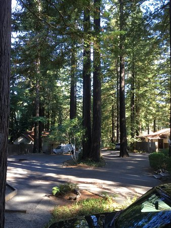 Miranda, Καλιφόρνια: photo1.jpg