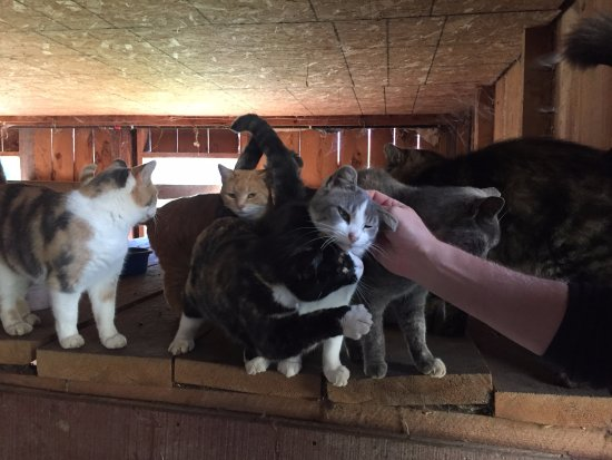Stepping Stone Farm Bed and Breakfast: the friendliest barn cats, ever.