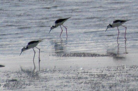 Colac Bird Reserve