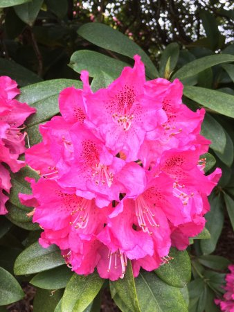 National Rhododendron Gardens: photo1.jpg