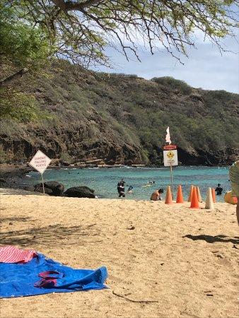 Hawaiian Ocean Promotions - Day Tours: photo1.jpg