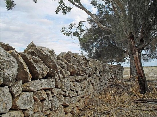 Colac, Australia: stoney rise fences