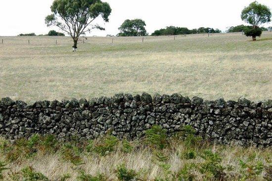 Lake Corangamite: stoney rise fences