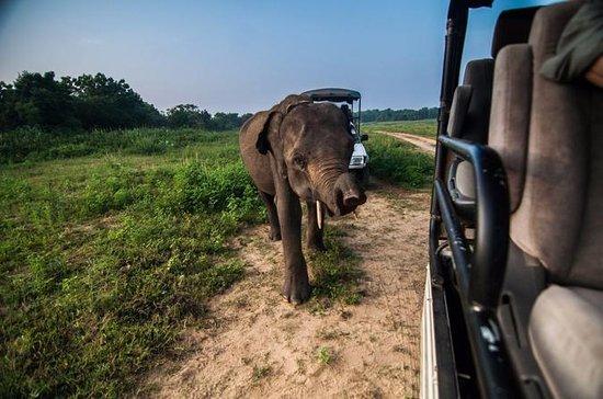 Udawalawe Private Safari Tour From...