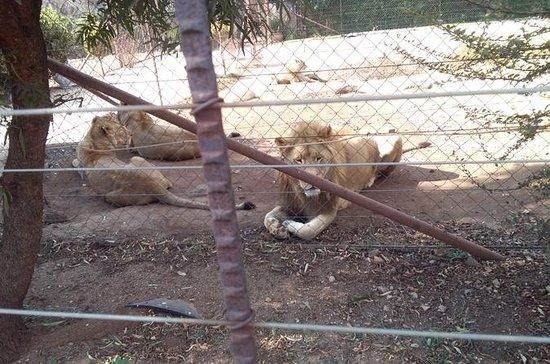 LION PARK DAY TOUR