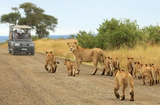 KRUGER NATIONAL PARK DAY TRIP FROM...