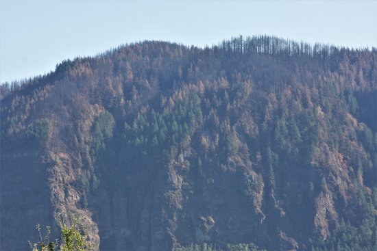 Columbia River Gorge National Scenic Area : This is normally all green! The trees on top of most mountains are like this.