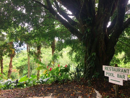 Lost Iguana Resort & Spa: our little path