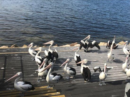 Kingscote, Australien: photo2.jpg