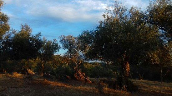 Constantina, Espagne : IMG-20171022-WA0074_large.jpg