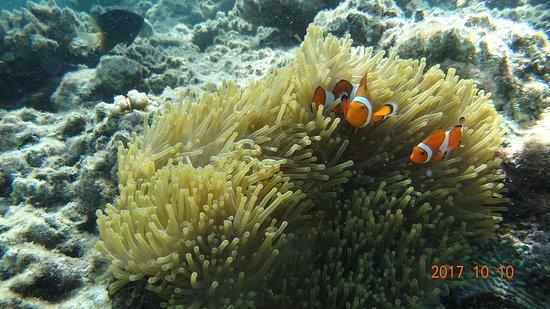 Taketomi-jima Photo