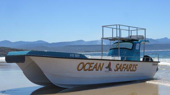 Ocean Safaris: The boat!