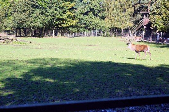 Wildpark Luneburger Heide: Wildpark Lüneburger Heide
