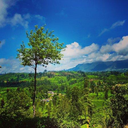 Lindula, Шри-Ланка: Diyanillakelle Estate Bungalows