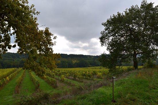 Eymet, Francia: More of the vinyard