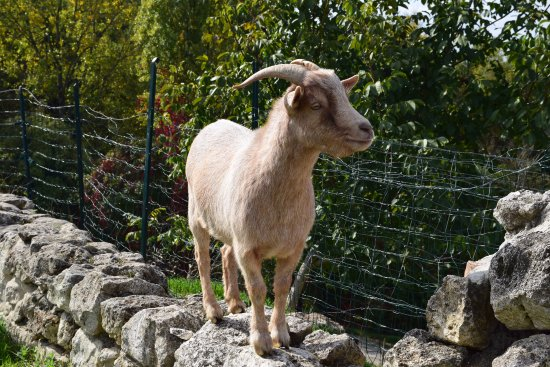 Eymet, France: Another lunch time onlooker