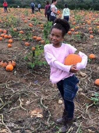 Chester, NJ: Pumpkin picking