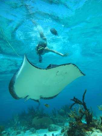 George Town, Grand Cayman: Snorkeling with Stingrays on our Nutshell Tour!