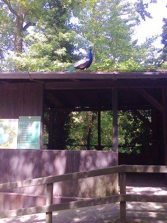 Parco Faunistico La Torbiera: animali