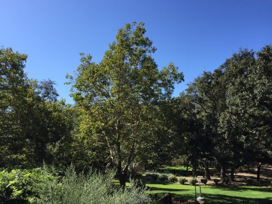 Yountville, Kalifornien: Grounds at Chandon