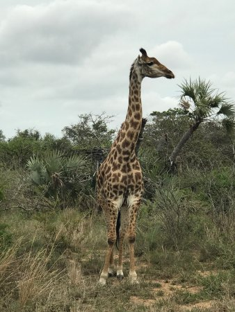 Phinda Private Game Reserve, South Africa: photo1.jpg