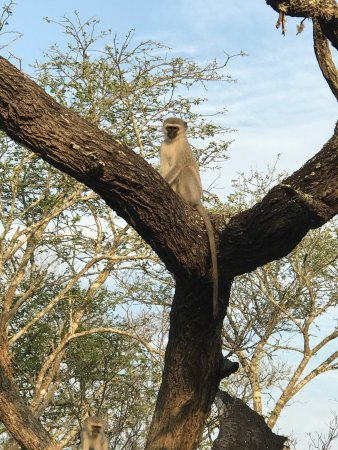 Phinda Private Game Reserve, South Africa: photo3.jpg