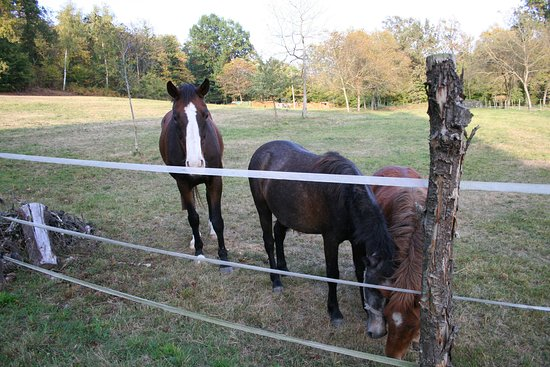Cascina Incocco: Some of the horses... also friendly