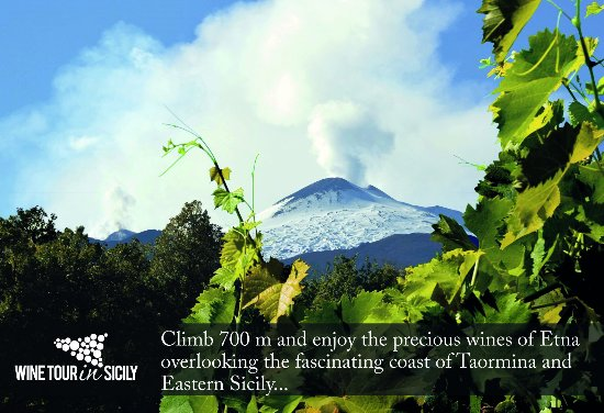 Wine Tour in Sicily - Day Tours