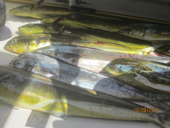 Pisces Sportfishing Photo