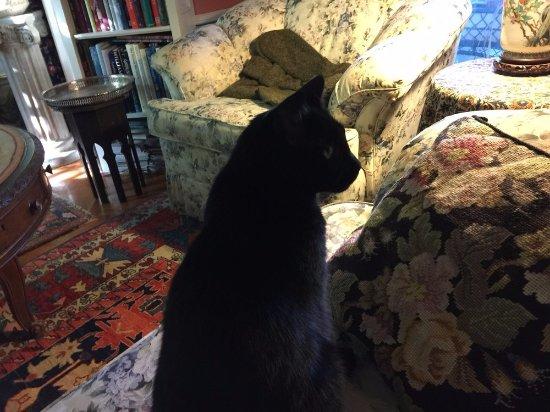 Rome, NY: JoJo ponders her next move, very nice kitties