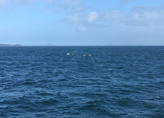 写真Port Angeles Whale Watch Company枚
