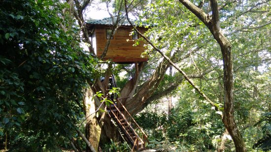 Santa Barbara, Costa Rica: The Tree House is amazing! Enjoy the view and a cup of tea when taking the tour.