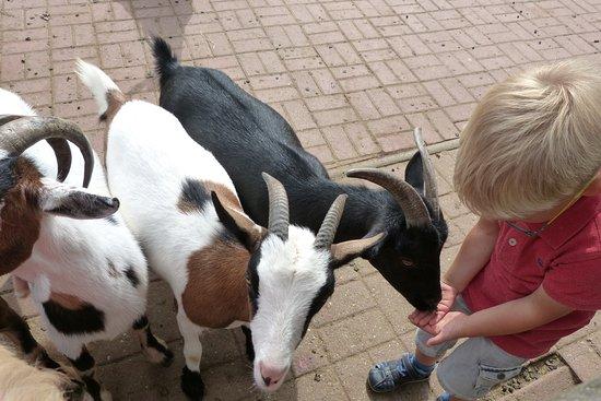 Streichelzoo - Bild von Arche Noah Zoo, Braunschweig