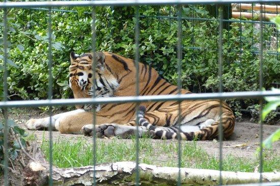 Arche Noah Zoo