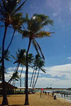 Koa Kea Hotel & Resort: Taken from our room....great view all day!