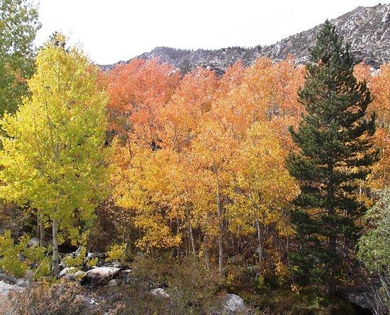 North Fork Bishop Creek