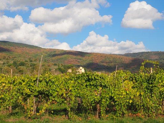 Relais Villa Baldelli: the vineyards