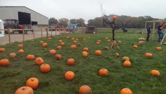 Beoley, UK: Pick a pumpkin from the patch !!
