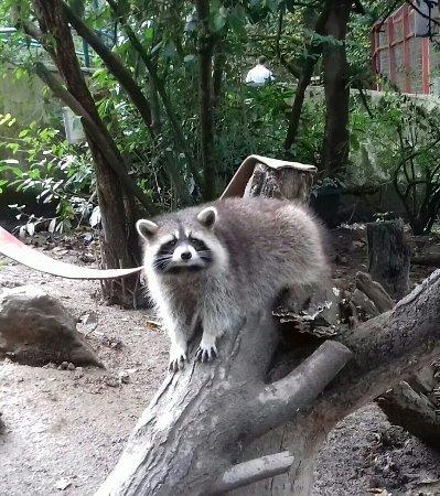 Combe Martin Wildlife and Dinosaur Park : 20171025_133146-1_large.jpg