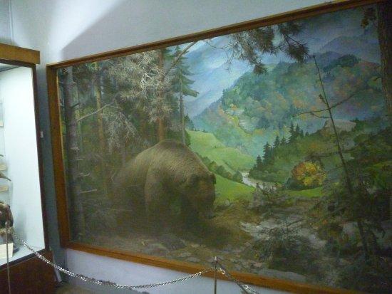 Drohobych, Ucrânia: медведь