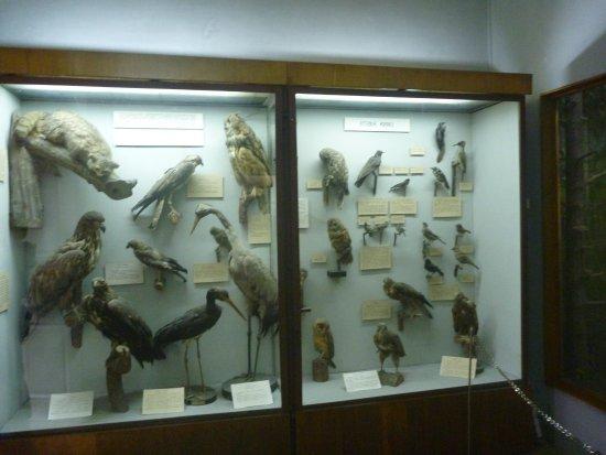 Drohobych, Ucrânia: птиц