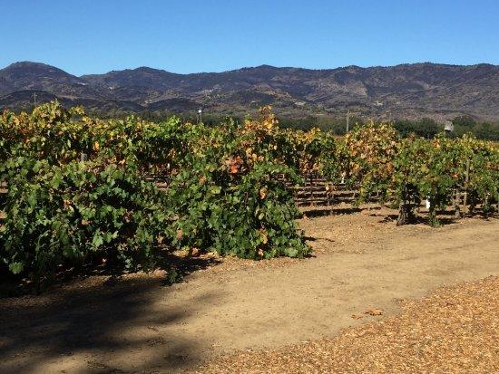 Robert Biale Vineyards: photo0.jpg