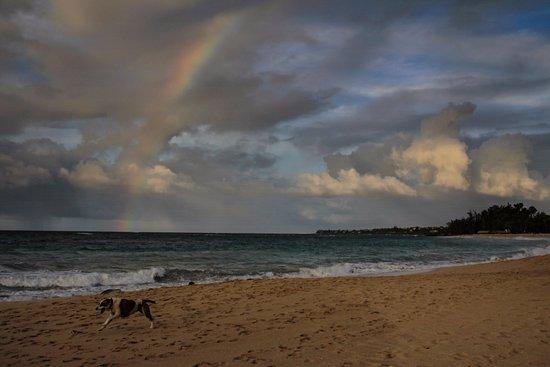 A rainbow over a dog at Baldwin Beach Park, Paia, 10-4-17