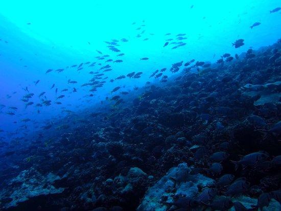 Tikehau Plongée : plongée poissoneuse proche de la passe Tikehau