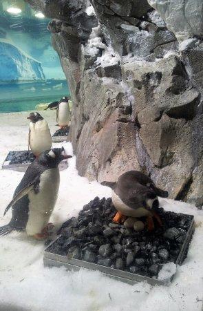 Sea World Resort Aufnahme