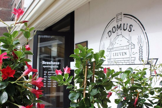 Lovaina, Bélgica: Begin your culinary adventure with a stop at Domus Brewery in Leuven - Traveling Spoon
