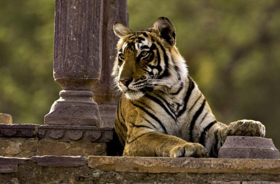 Private Overnight Tour of Ranthambore...