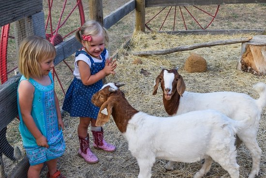 Livermore, CO: Petting Zoo for all ages
