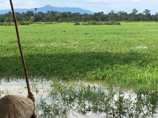 Ban Khiet Ngong, Laos: A view of the wetlands with the Bolaven Plateau in the background