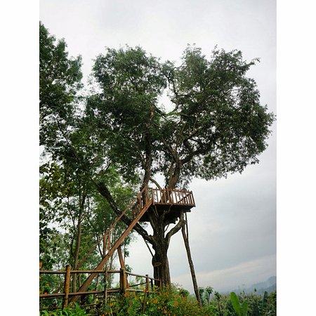 Barede Hill: Tree house for sunrise spot